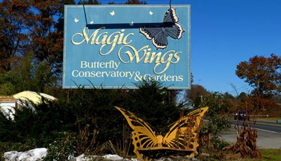 magic-wings-deerfield