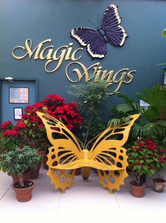 magic-wings