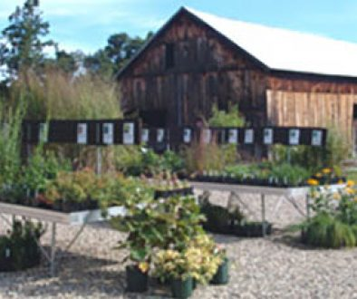 New England Wild Flower Society's Nasami Farm